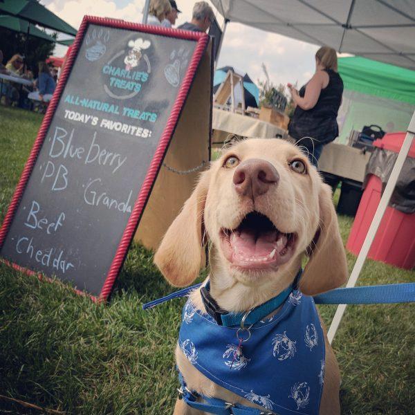 Puppy in Blue Crab Bandana