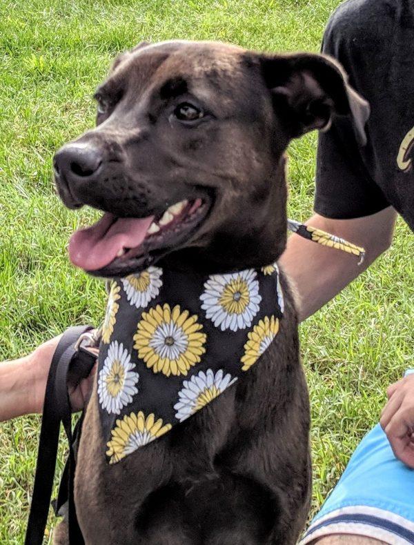 Dog in Yellow and White Flower Bandana