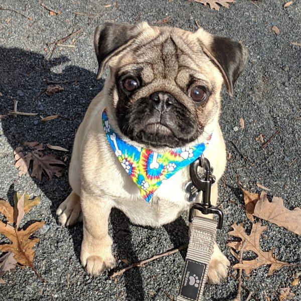 Lenny in Paws & Bones Tie-Dye Bandana