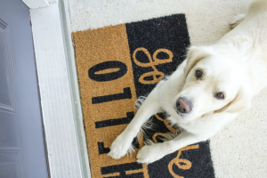 Moving to Dover Dog on Welcome Mat