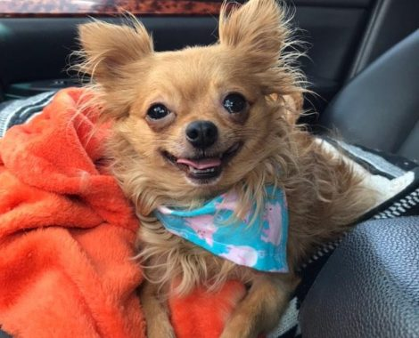 Pet of the month winner